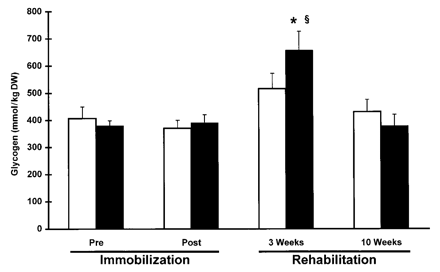 Effect of creatine supplementation on muscle glycogen concentration during immobilization and subsequent rehabilitation training.