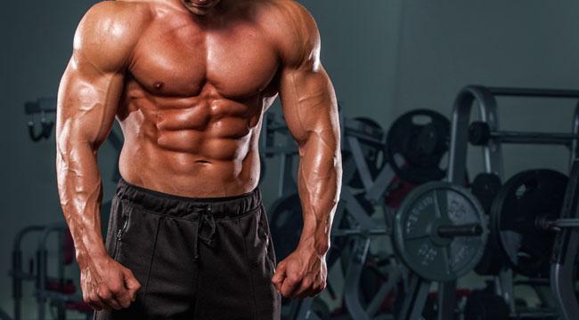 Muscular body - anti estrogen